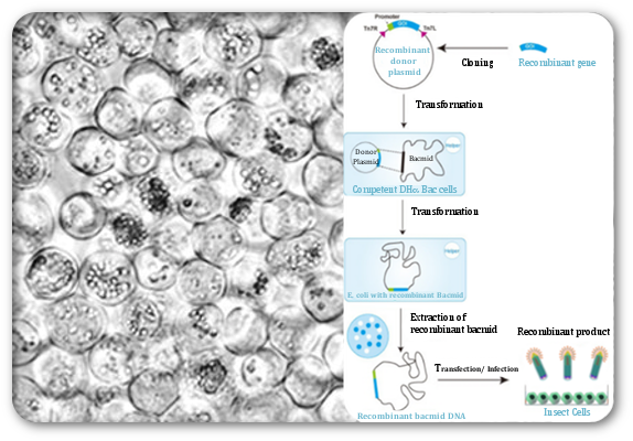 Resources | Viral Vectors and Vaccines Bioprocessing Group